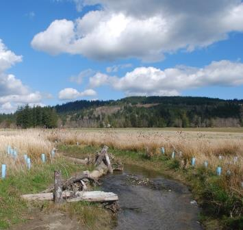Donovan Creek