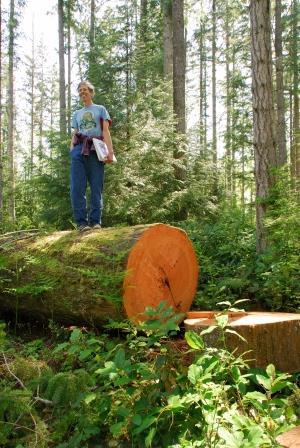 timber cutting