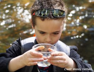 "A Grant Street Elementary student wishes ""happy travels"" to the coho salmon fry he's about to release into Chimacum Creek. Photo credit Wendy Feltham."