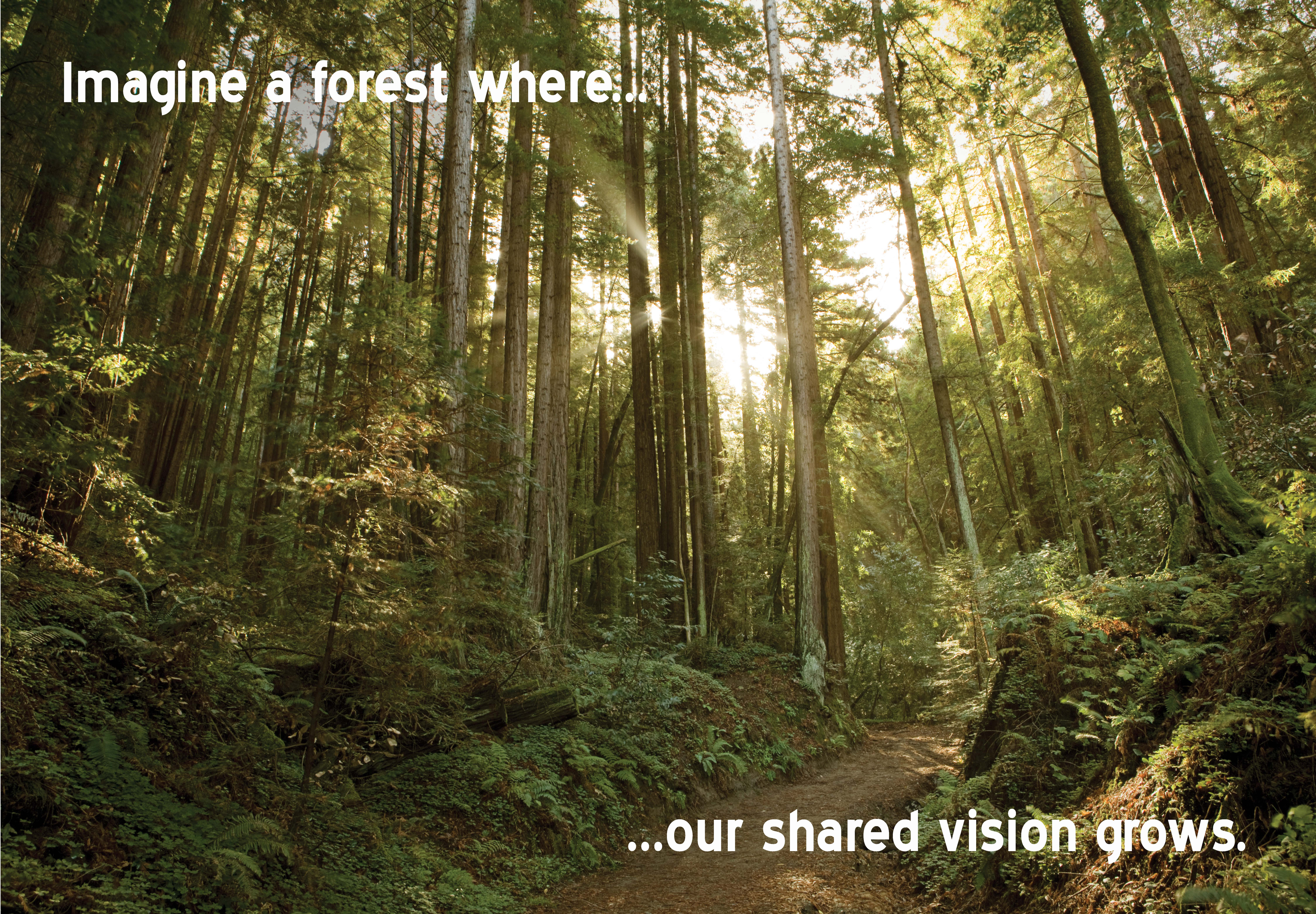 Community Forest Vision: Imagine a forest where our shared vision grows.