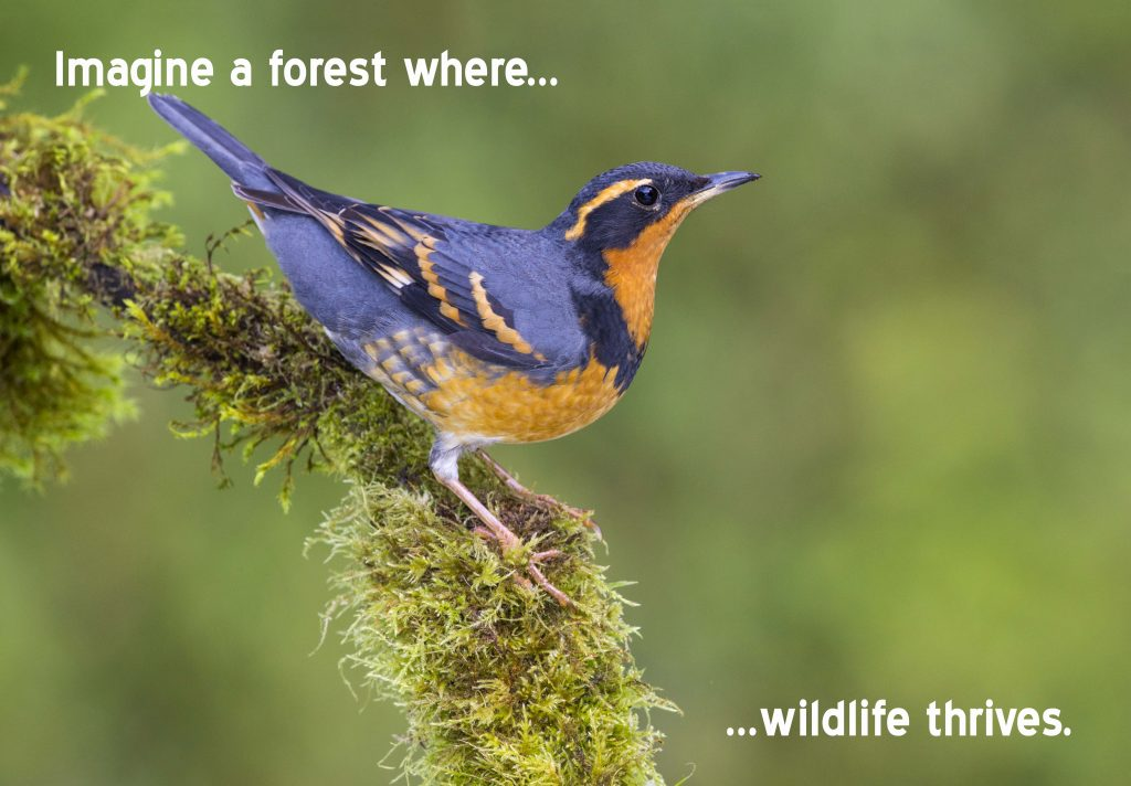 A Forest Where Wildlife Thrives