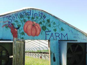 Serendipity Farm