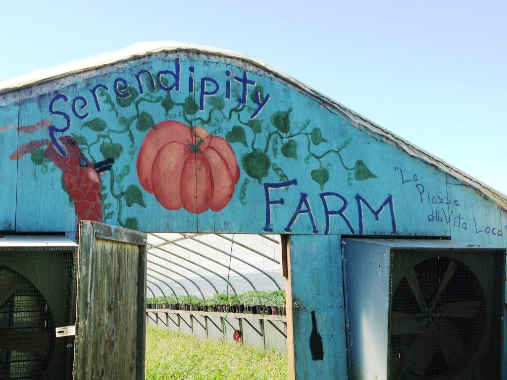 Serendipity Farm