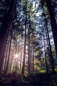 Forest at Trillium Woods Farm
