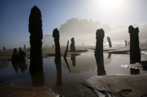 Ghost Forest on the Oregon Coast. Photo by Jamie Hale for The Oregonian