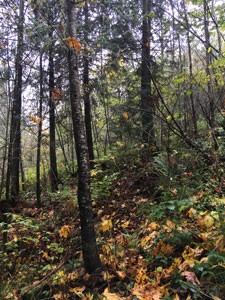 Diverse forested area on family farm in Quilcene