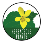 Herbaceous Plants exploration icon