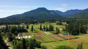 Midori Farm by John Gussman