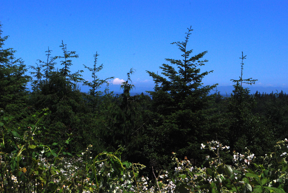 View of Mount Baker from top of Chimacum Ridge