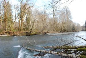 Duckabush Riparian Forest Preserve