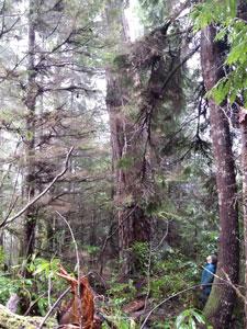 Sarah Spaeth observes tall tree
