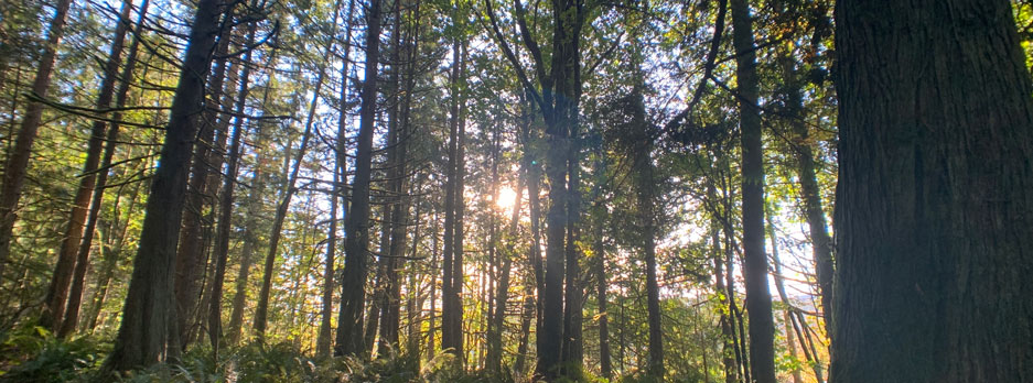 Trees at Valley View Forest