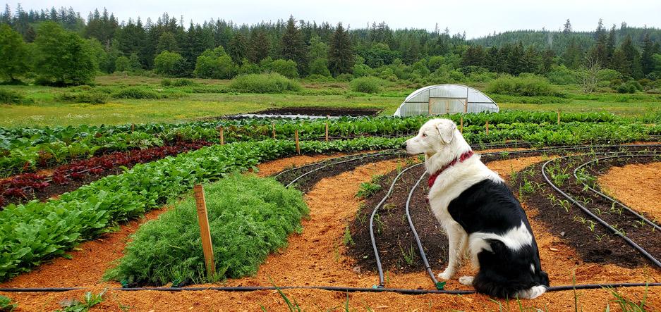 Kodama Farm