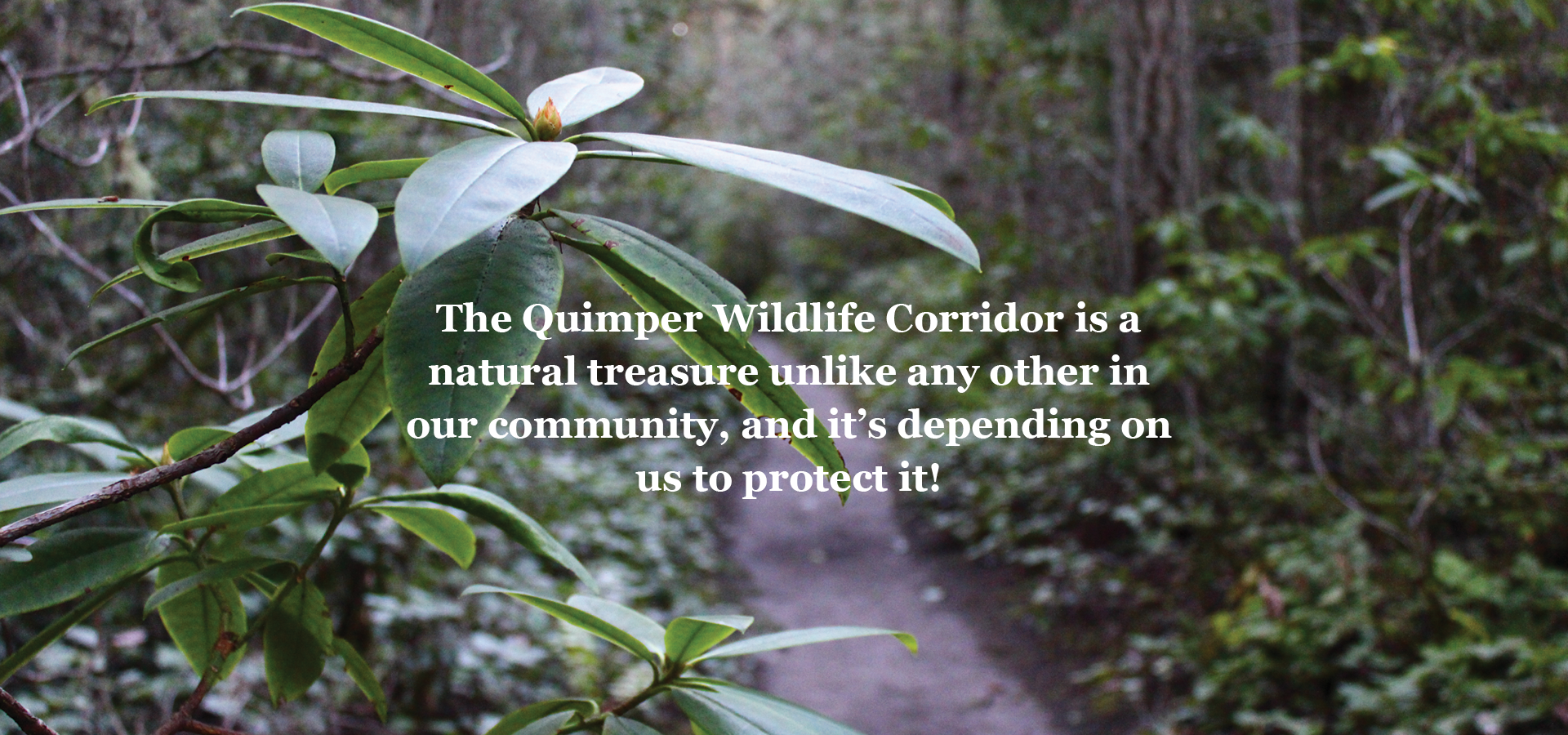 Quimper Wildlife Corridor Trail Image with text overlay that reads: The Quimper Wildlife Corridor is a natural treasure unlike any other in our community and it's depending upon us to protect it!