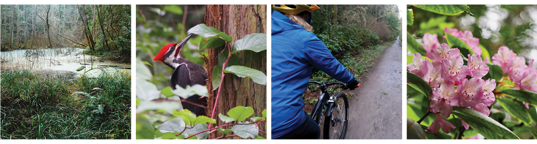 Band of images taken in the Quimper Wildlife Corridor: Wetland, Pileated Woodpecker, Bicyclist, and Rhododendron. Photos by John Gussman and Wendy Feltham.