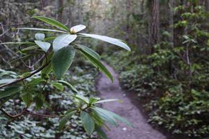 Quimper Wildlife Trail Photo