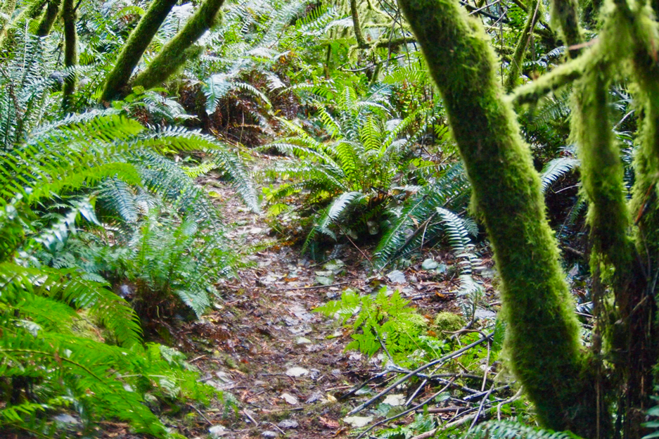 Photo of lush greenery in Quimper West Preserve.Photo by Wendy Feltham.