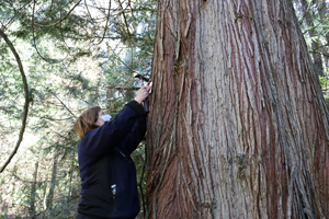 Photo of a volunteer marking a wildlife habitat tree at Valley View