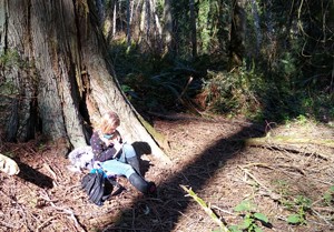 A young blonde girl in rainboots sits at the base of a large cedar tree, writing in her journal.