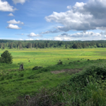 Wide view of farmland with trees in the far background.