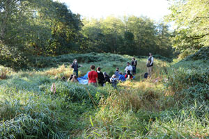 Far-away shot of group of students in long grass.