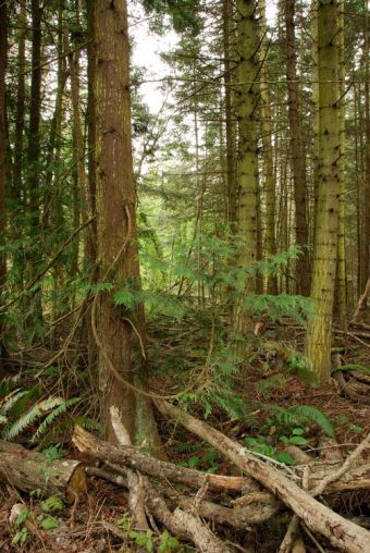 The Quimper Wildlife Corridor is a forested greenbelt which links a series of wetlands within Port Townsend.