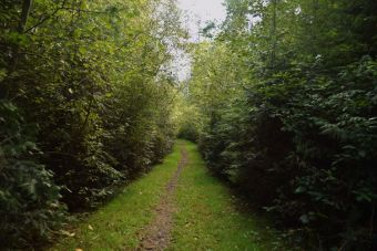 Quimper West Preserve is a beautiful mature forest threaded with footpaths.