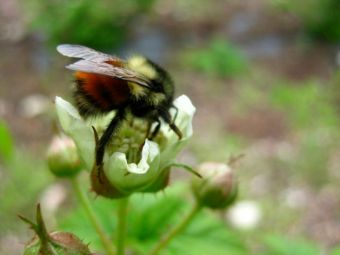 Finnriver Bee at work