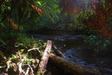 Chimacum Creek at Illahee Preserve